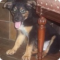 Adopt A Pet :: Flame - Plainfield, CT