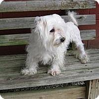 Adopt A Pet :: CHAUNCEY - W. Warwick, RI