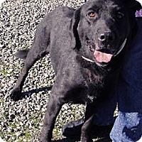 Adopt A Pet :: Buddy super dog - Sacramento, CA