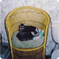 Adopt A Pet :: Devi - Fayette, MO