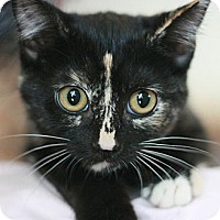 Adopt A Pet :: Alynna - Canoga Park, CA