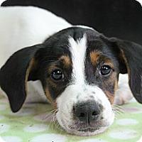 Adopt A Pet :: Slate - Bedminster, NJ