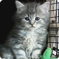 Adopt A Pet :: Lana - bloomfield, NJ