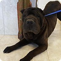 Adopt A Pet :: Eggroll in TX- pending - Mira Loma, CA