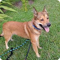 Adopt A Pet :: Junior - Ft. Lauderdale, FL