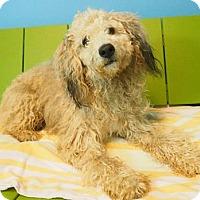 Adopt A Pet :: Mr. Wiggles - New Orleans, LA