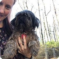 Adopt A Pet :: Bojangles - Manchester, NH