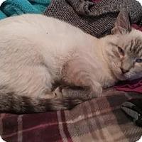 Adopt A Pet :: Katana - Livonia, MI