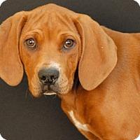 Adopt A Pet :: Tiara - Newland, NC