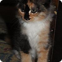 Adopt A Pet :: Sylvie (GP) 3.9.17 - Orlando, FL