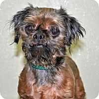 Adopt A Pet :: Fudge - Port Washington, NY