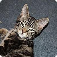 Adopt A Pet :: Badger (LE) - Little Falls, NJ