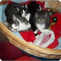 Adopt A Pet :: home 4 xmas - Little Neck, NY