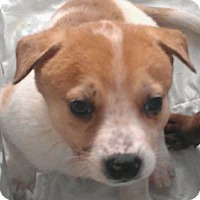 Adopt A Pet :: Anton the Giant - fairy tale - Phoenix, AZ