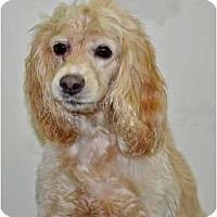 Adopt A Pet :: Charlie - Port Washington, NY