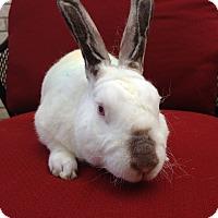 Adopt A Pet :: Huey - Watauga, TX