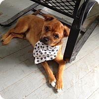 Adopt A Pet :: T-Dog - Cedar Rapids, IA