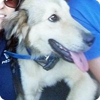 Adopt A Pet :: Hollis - BIRMINGHAM, AL
