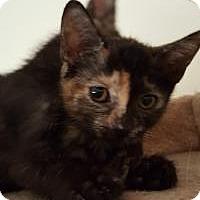 Adopt A Pet :: Sandie - Mission Viejo, CA