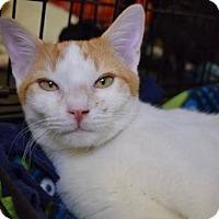 Adopt A Pet :: Bacardi - Los Angeles, CA