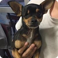 Adopt A Pet :: CHICO - San Antonio, TX