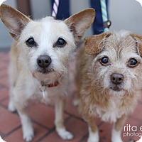 Adopt A Pet :: Darla *bonded with Eugenia - Los Angeles, CA