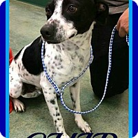 Adopt A Pet :: CHIP - Jersey City, NJ