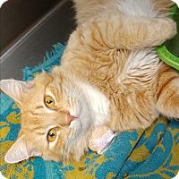 Adopt A Pet :: Curd - Umatilla, FL