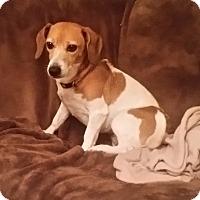 Adopt A Pet :: Cali - Bardonia, NY