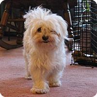 Adopt A Pet :: Cisco - St Paul, MN