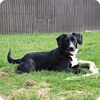 Adopt A Pet :: Jasper - Sparta, NJ
