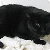 Adopt A Pet :: Shadow - Gary, IN