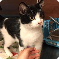 Adopt A Pet :: Gidget - Lexington, KY