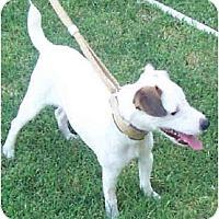 Adopt A Pet :: KODI aka