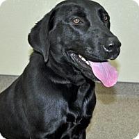 Adopt A Pet :: Mimi - Port Washington, NY
