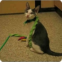 Adopt A Pet :: Gregory - Orlando, FL
