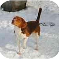 Adopt A Pet :: Auggie - cedar grove, IN