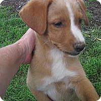 Adopt A Pet :: Titus - Humboldt, TN