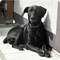 Adopt A Pet :: Jack - Adopt me! - Vancouver, BC