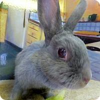 Adopt A Pet :: Bella - Foster, RI
