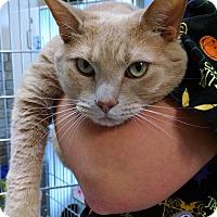 Adopt A Pet :: Leroy - Armuchee, GA
