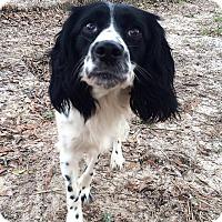 Adopt A Pet :: Dot - Daleville, AL