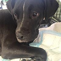 Adopt A Pet :: Halifax - Evergreen, CO