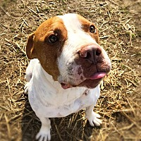 Adopt A Pet :: Hank - Bonaire, GA