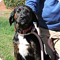 Adopt A Pet :: Xena - Berkeley Heights, NJ