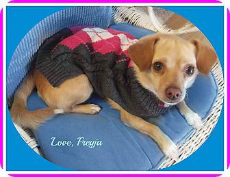 Chihuahua/Pug Mix Dog for adoption in Seattle, Washington - Freyja