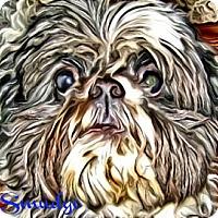 Adopt A Pet :: Smudge-PA - Emmaus, PA