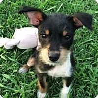 Adopt A Pet :: Jax - Homewood, AL