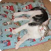Adopt A Pet :: Dante - Seminole, FL