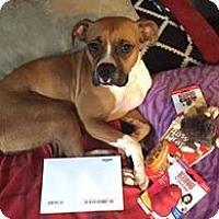 Adopt A Pet :: Queen - Westminster, MD